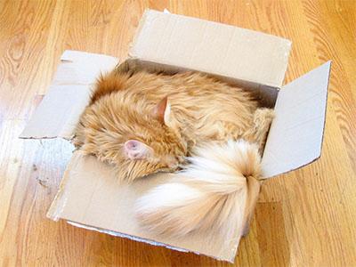 Brown Box Cat