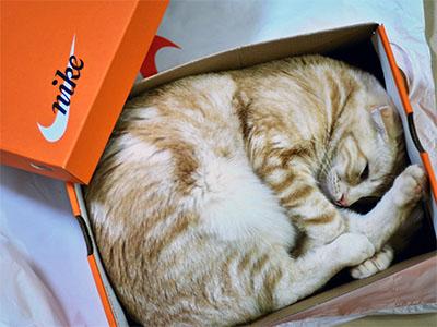 Orange Guy in Shoebox