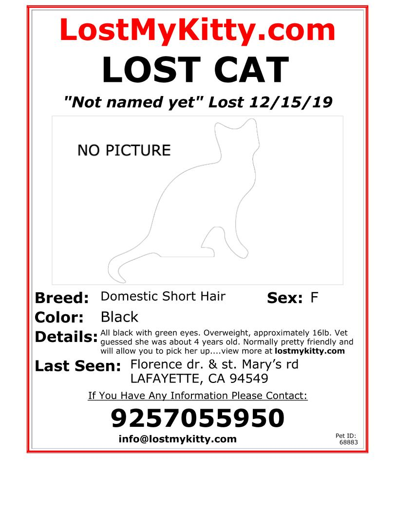 Not-Named-Lost-Cat