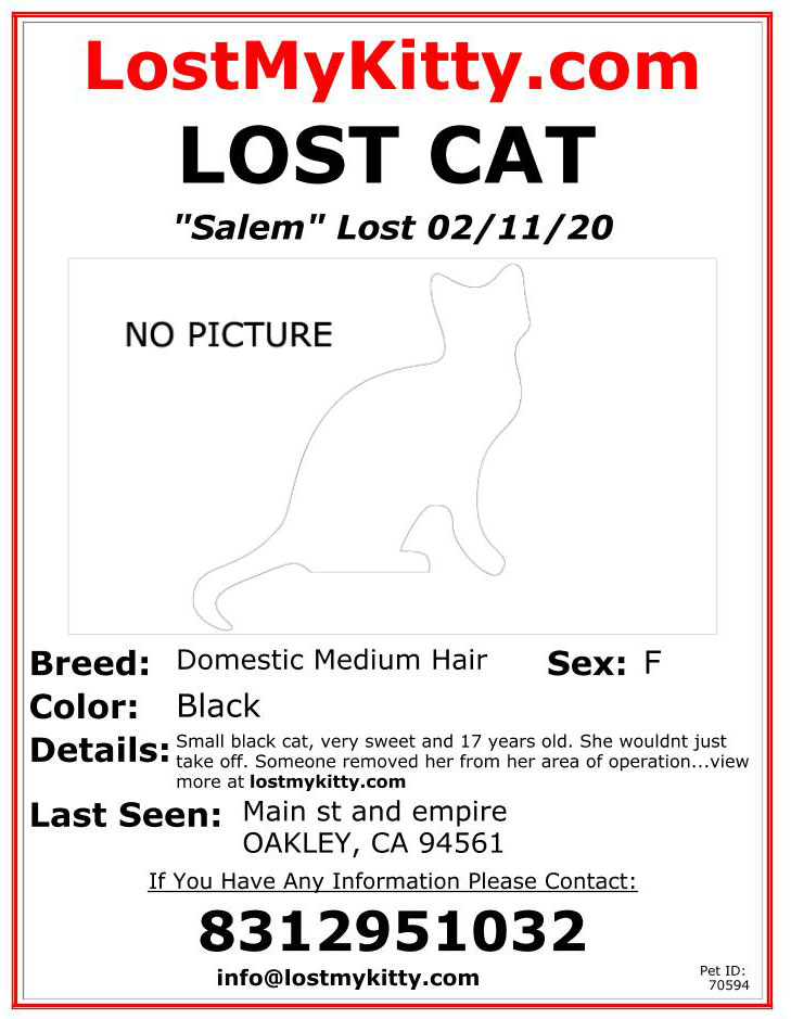 Charlie-Lost-Cat