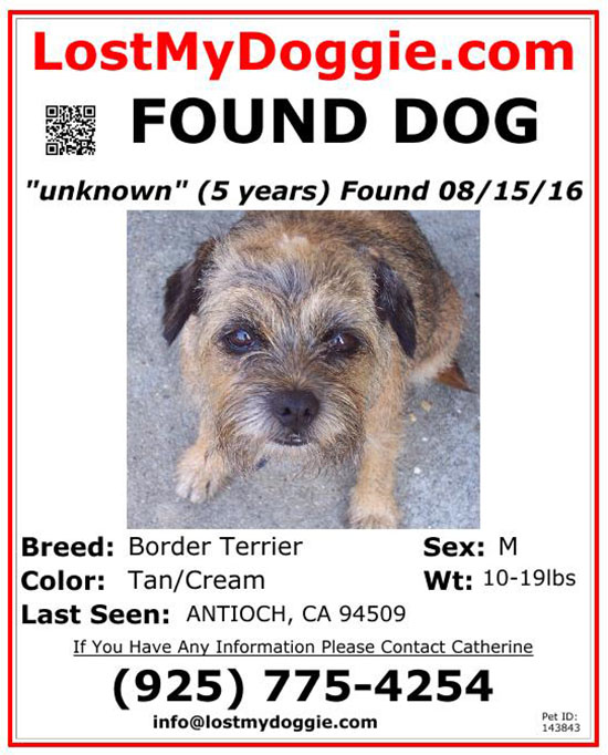how to make a found dog flyer