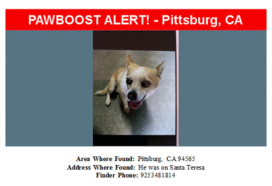 found-dog-chihuahua-mix-08-24-16 Flyer