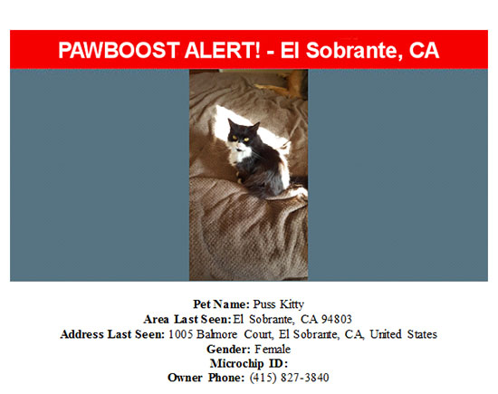 lost-cat-puss-kitty-09-23-16 Flyer