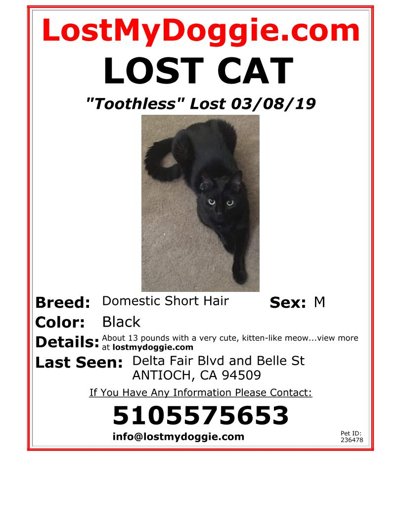 lost-cat-toothless-236478