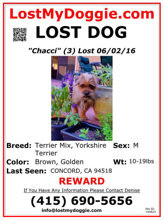 lost-dog-chacci-06-02-16 Flyer
