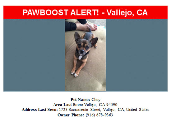 lost-dog-chuy-09-23-16 Flyer