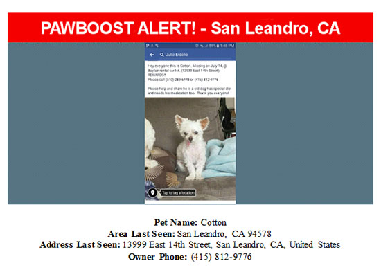 lost-dog-cotton-08-24-16 Flyer