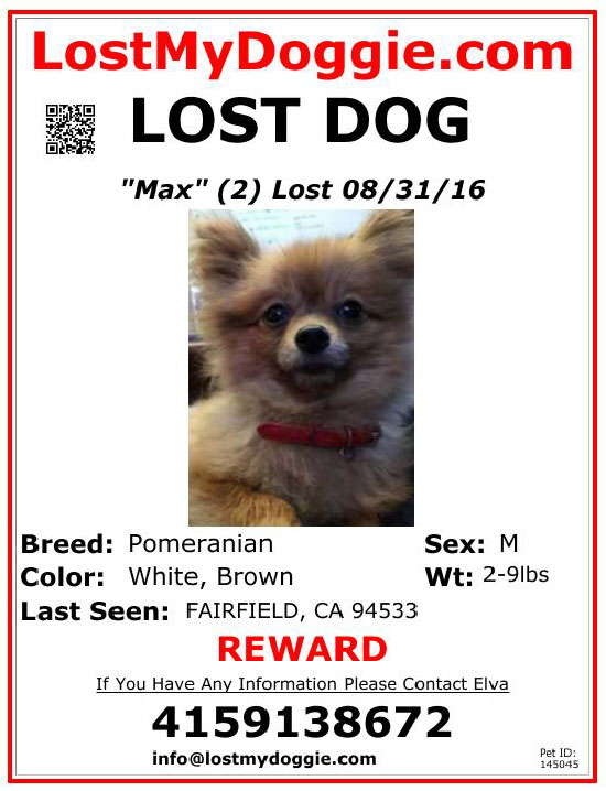 lost-dog-max-08-31-16 Flyer