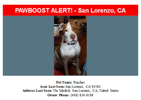 lost-dog-peaches-09-12-16 Flyer