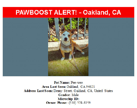 lost-dog-pee-wee-09-23-16 Flyer