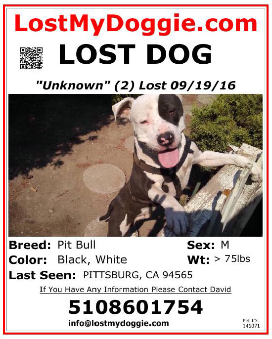 lost-dog-pit-bull-09-19-16 Flyer
