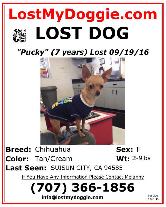 lost-dog-pucky-09-19-16 Flyer