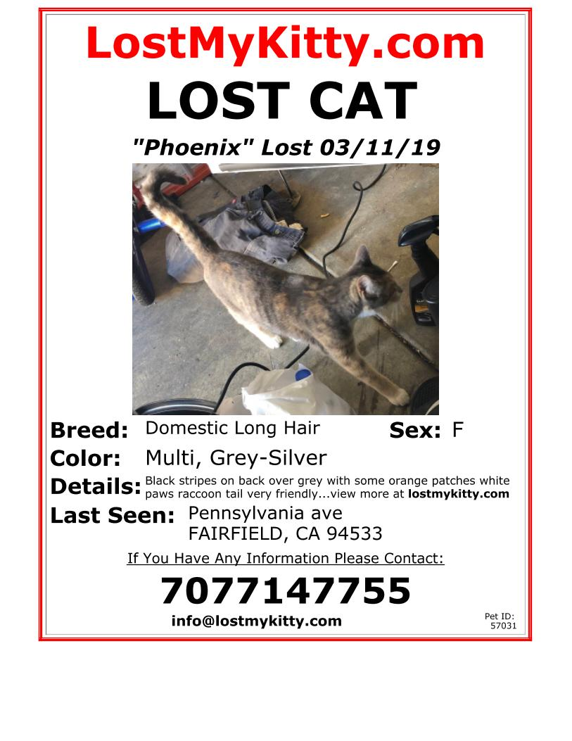 Scout-cat-lost-56558