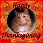 cat and turkey 2