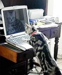 cat on computer