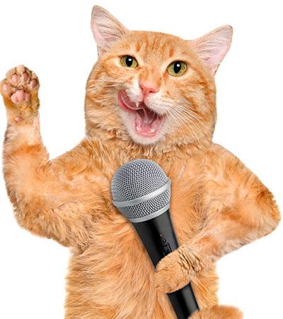 announcer-cat